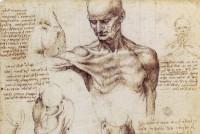 Leonardo da Vinci sketch
